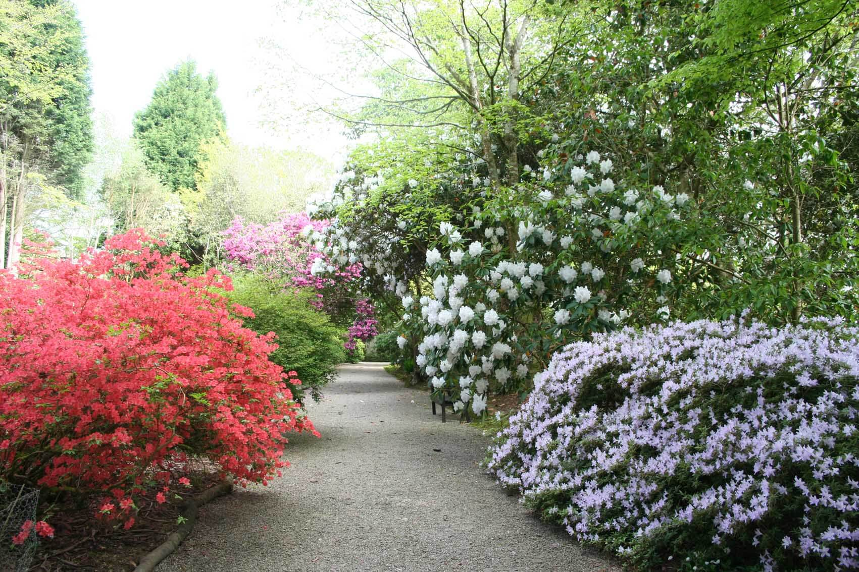 The George Johnson Walk at Trewithen Gardens in Cornwall