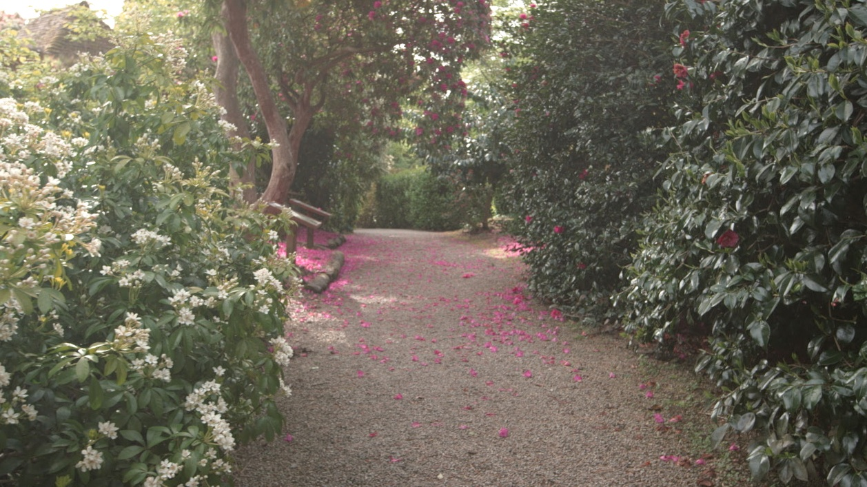 Pathway at Trewithen Gardens in Cornwall