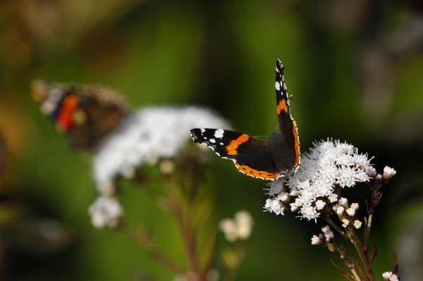 Wildlife in Cornwall - Trewithen Gardens