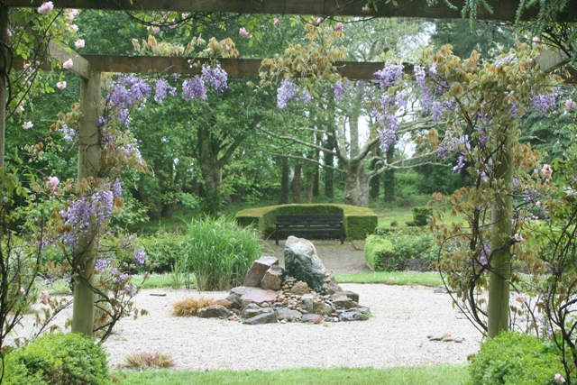 Wisteria in rose garden 1