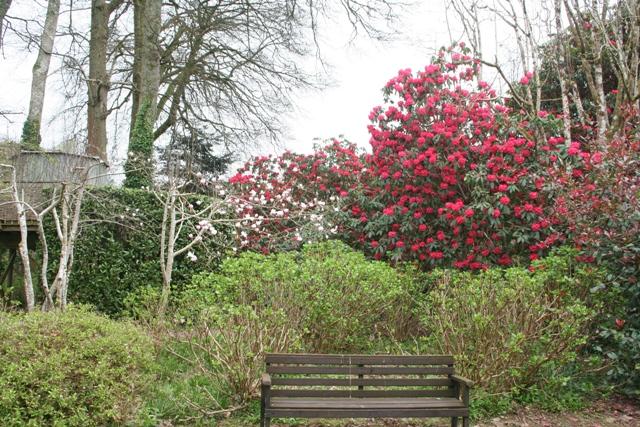 Trewithen Gardens in Cornwall