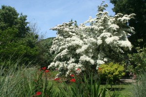 Beautiful gardens at Trewithen in Cornwall