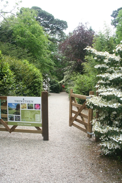 Welcome to Trewithen Gardens, a fantastic place to visit in Cornwall