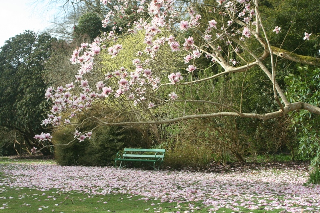 Places to visit in Cornwall - Trewithen Gardens