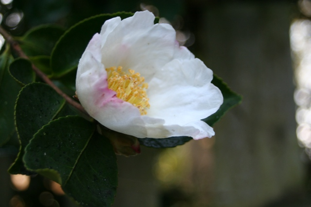 Plant of the month for November