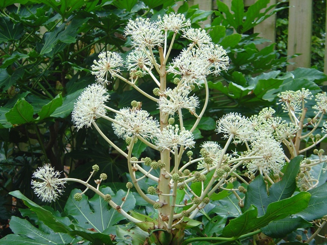 Plant of the month for December