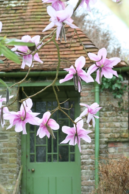 Plant of the month for February