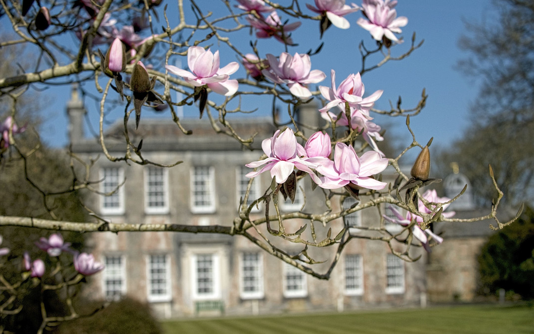 Trewithen Gardens marks its 300th anniversary